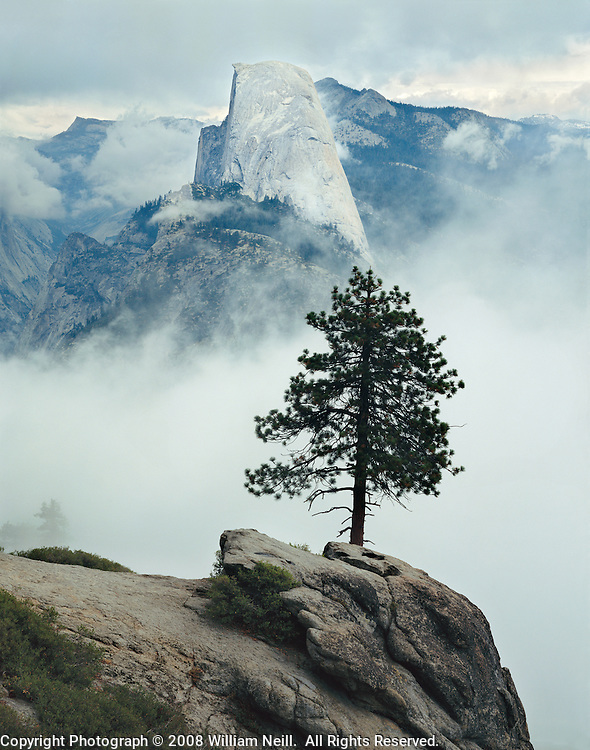 Half Dome and pine in clouds, Washburn Point, Yosemite National Park, California