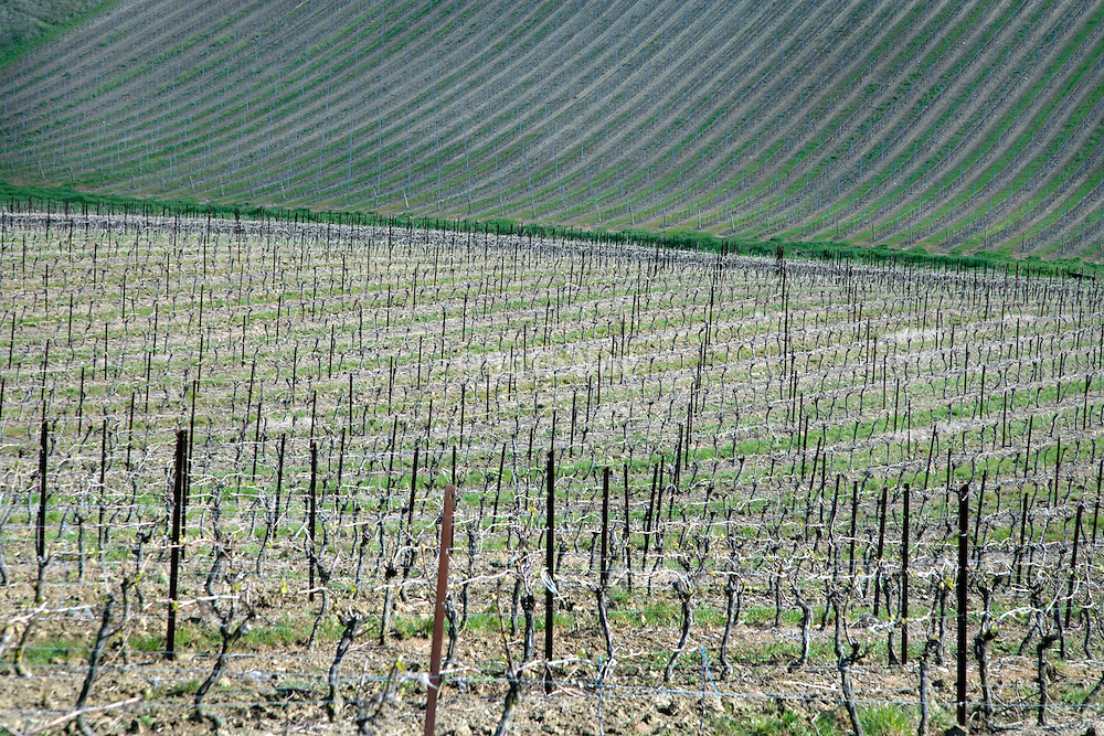 vineyard France the Languedoc in the month of April