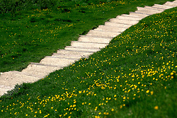 UK ENGLAND NORTH SOMERSET GLASTONBURY 7MAY05 - Green grass and yellow flowers on both sides of concrete steps leading up the Glastonbury Tor, a 512-ft landmark hill visible for miles around in the Somerset landscape. <br /> <br /> jre/Photo by Jiri Rezac<br /> <br /> © Jiri Rezac 2005<br /> <br /> Contact: +44 (0) 7050 110 417<br /> Mobile:  +44 (0) 7801 337 683<br /> Office:  +44 (0) 20 8968 9635<br /> <br /> Email:   jiri@jirirezac.com<br /> Web:     www.jirirezac.com<br /> <br /> © All images Jiri Rezac 2005 - All rights reserved.