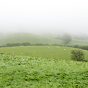 Mists partly obscure the rolling hillsides of a farm on a plateau in Snowdonia, Wales.