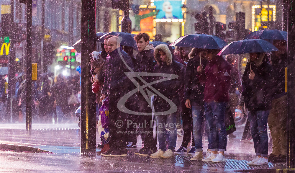 London, December 31 2017. The umbrellas come out as a downpour begins in London's west end ahead of the New Year's Eve fireworks at midnight. PICTURED: A man holds a dog as he and others wait to cross the road at Piccadilly Circus. © SWNS