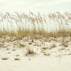 Pensacola Beach Florida beach grass beachscape retro panorama photo. Pensacola Beach is a coastal city in the Emerald Coast area of the Southeastern United States. Panoramic photo ratio is 1:3. Copyright ⓒ 2018 Paul Velgos with All Rights Reserved.