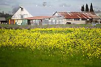 2014 March 20:  Spring in Petaluma.  Stock Photos