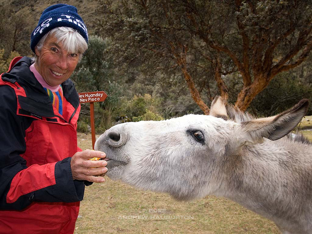 Iona Stewart feeds burro at Cebolla Pampa at Cebolla Pampa in the Quebrada Llanganuco (Llanganuco Valley).  Cebolla Pampa is at the 77km road marker from Yungay, and is the trailhead for Pisco Base Camp and Rifugio Perù.