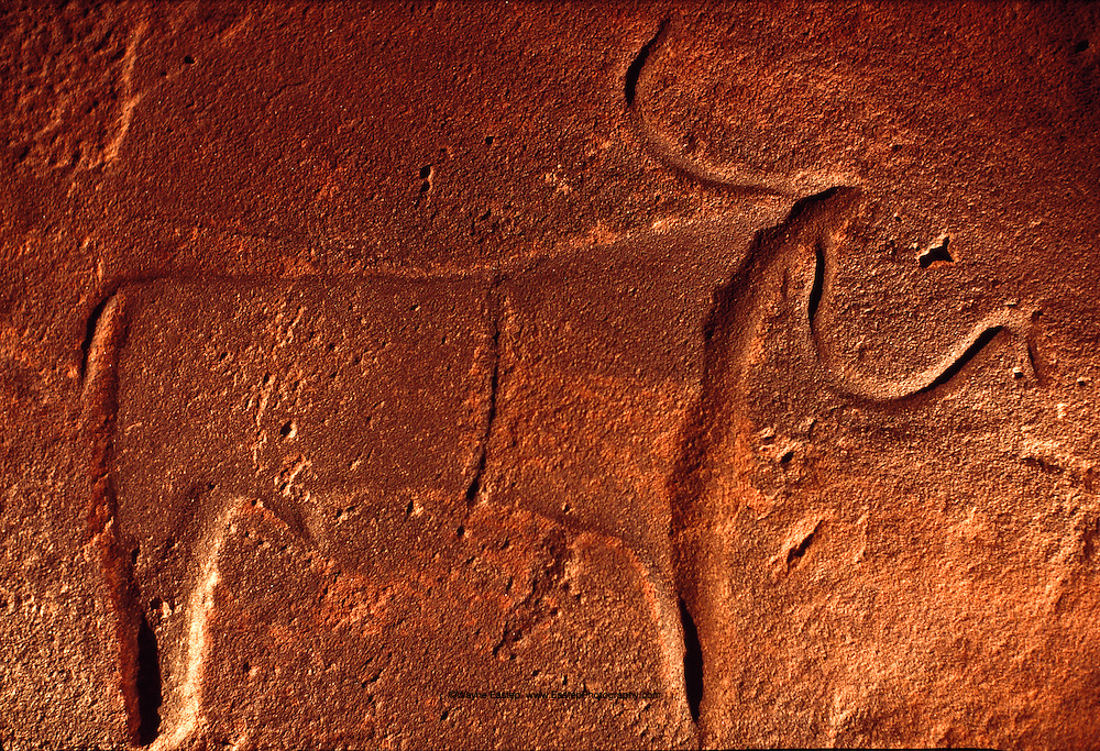 Bull, perhaps Texas Longhorn ancestor, was incised by pastoral tribe at Hanakiyyah several millennia B.C. (early neolithic) Saudi Arabia