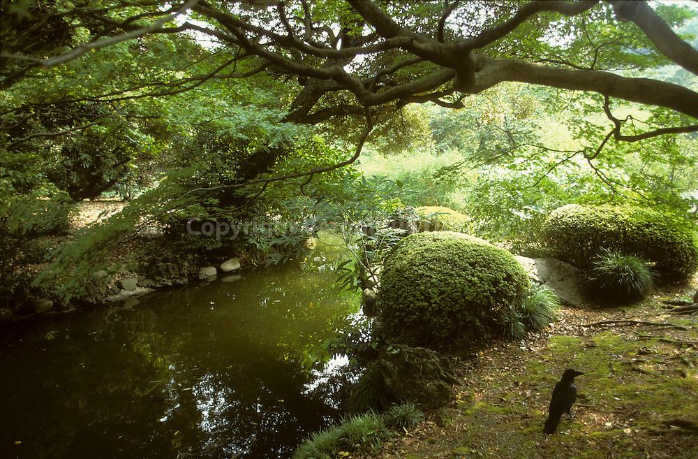 Tokyo In All Senses : nature