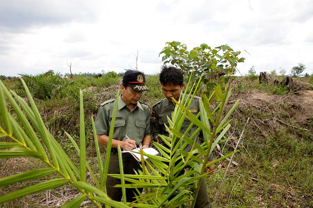Hayani Supraham, left, head of Tesso Nilo National Park on the island of Sumatra, Indonesia, checks some palm oil trees in an encroachment area, Aug. 29, 2008. .Daniel Beltra/Greenpeace
