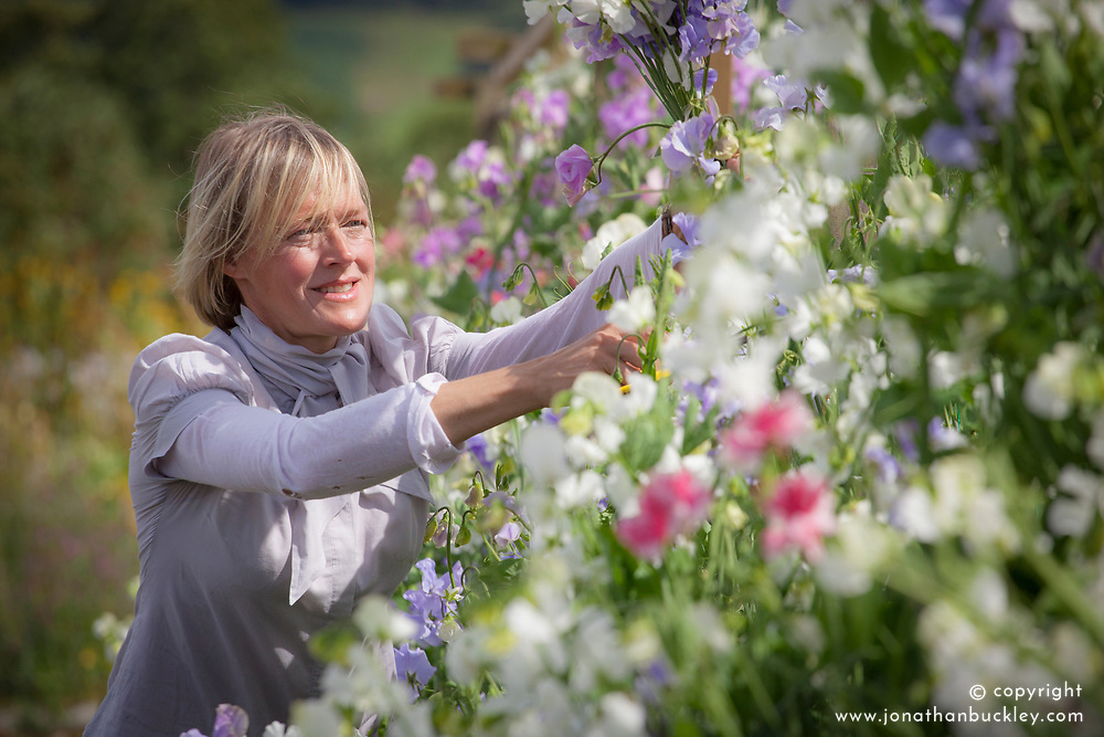 Juliet Glaves picking sweet peas. Lathyrus odoratus