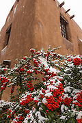 Snow covers a firethorn shrub at the adobe style New Mexico Museum of Art in the historic district December 12, 2015 in Santa Fe, New Mexico.