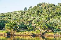 Mpenjati estuary riparian vegetation. Mpenjati Nature Reserve. Southern KwaZulu Natal. South Africa