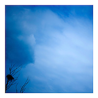 A large nest in a tree with a stormy blue summer sky in the background.