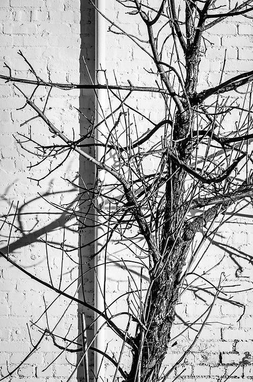 Organic lines of a winter tree contrast with the hard lines of the building behind it.  Taken in downtown Greensboro, North Carolina.