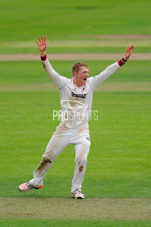 5 wickets for Dom Bess - Dom Bess of Somerset celebrates taking his 5th wicket on his debut County Championship match, dismissing Rikki Clarke of Warwickshire during the Specsavers County Champ Div 1 match between Somerset County Cricket Club and Warwickshire County Cricket Club at the Cooper Associates County Ground, Taunton, United Kingdom on 6 September 2016. Photo by Graham Hunt.