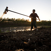 Bolivia. Loma Suarez. A woman spreads topioca(unsure of spelling) collected from the irrigation channels to fertilise her camellones