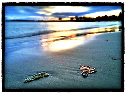 """Oak leaf on beach at New Castle Common, New Castle, New Hampshire. iPhone photo - suitable for print reproduction up to 8"""" x 12""""."""