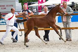 018 - Imagine H<br /> Finale springveulens<br /> KWPN Paardendagen Ermelo 2013<br /> © Hippo Foto - Leanjo de Koster