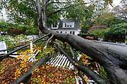A huge tree split apart and fell over the front yard and fence of a home in Sea Cliff; N.Y. in the aftermath of Hurricane Sandy on Tuesday; Oct. 30; 2012.  (AP Photo/Kathy Kmonicek)