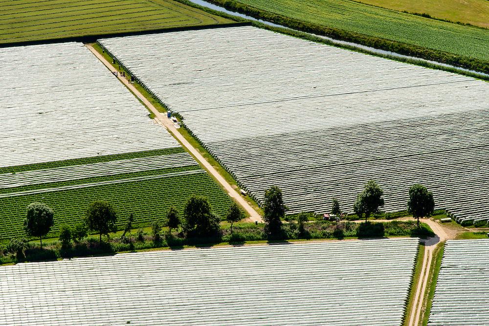 Nederland, Noord-Brabant, Gemeente Heeswijk-Dinther, 26-06-2014;  <br /> Akkers met asperges onder landbouwplastic.<br /> Fields of asparagus under plastic cover<br /> luchtfoto (toeslag op standaard tarieven);<br /> aerial photo (additional fee required);<br /> copyright foto/photo Siebe Swart.