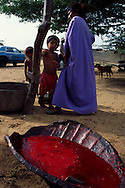 Un caparazón de tortuga lleno de sangre  de chivo en el mercado lo Filudos. Paraguaipoa, 09-01-2001 (Ramón Lepage / Orinoquiaphoto)    Los Filudos, a Guajiro indigenous market near the Venezuelan - Colombian border on the Guajira . Paraguaipoa (Ramón Lepage / Orinoquiaphoto)