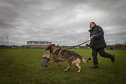 © Licensed to London News Pictures . 13/11/2012 . Manchester , UK . Joe Flood with 9 month old rescue German Shepherd , Jerry . Specialist handlers from Greater Manchester Police put police dogs through their paces at a training event . Greater Manchester Police are appealing for members of the public to donate unwanted dogs to the force . Photo credit : Joel Goodman/LNP