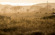 Cattle graze on land near San Simeon, California