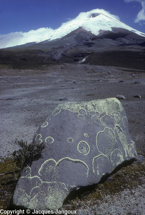 South America, Ecuador, Cordillera de los Andes, snow-covered volcano Cotopaxi. Boulder covered with lichens in foreground.