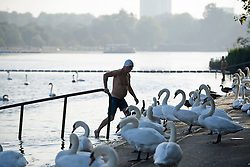 © Licensed to London News Pictures. 15/09/2016. London, UK. A swimmer emerges from the water surrounded by Swans in Hyde Park in early morning sunshine. Another exceptionally warm Autumn day is expected today in parts of the United Kingdom. Photo credit: Ben Cawthra/LNP