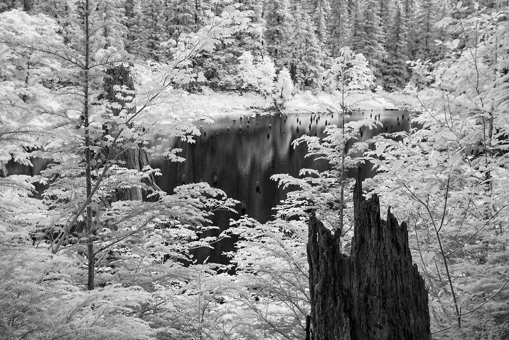 Spider Lake Overlook - Olympic National Forest - Infrared Black & White