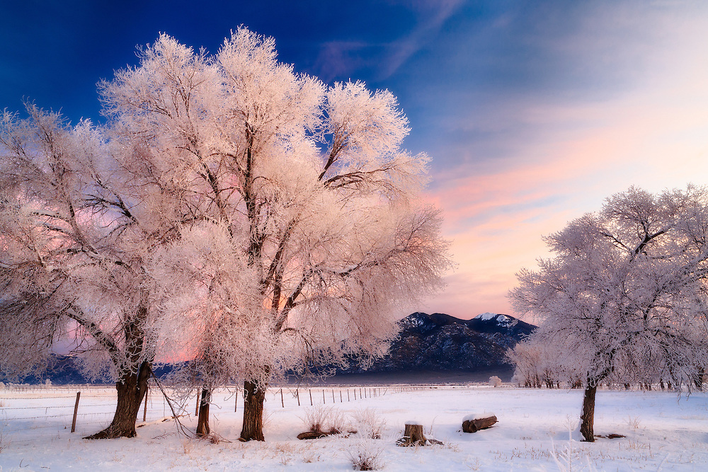 A winter sunrise in Taos, New Mexico on New Year's Day 2007. The cottonwood trees are covered in Rim Ice and Pueblo Peak is visible in the background.