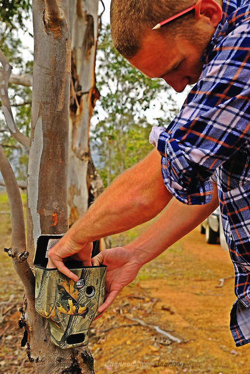 University of Western Sydney's School of Natural Sciences PhD candidate (Wildlife Ecology)  Jack Pascoe checks a motion sensor camera in the remote Southern Greater Blue Mountains world heritage area.