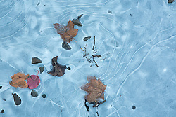 Fall leaves and stones in a frozen lake