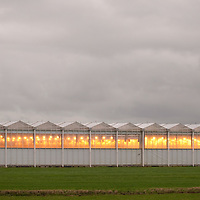 Kassen langs de N470 in Berkel en Roodenrijs...Greenhouses with spoiling lights...