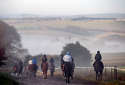 Race horses are exercised on the gallops in Lambourn, Berkshire.