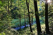 Polenztal, Elbsandsteingebirge, Sächsische Schweiz, Sachsen, Deutschland.|.Polenz Valley, Saxon Switzerland, Saxony, Germany