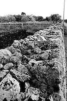 Alessano (LE) - LA campagna di Alessano presenta le caratteristiche tipiche della campagna Salentina: alberi di ulivo, muretti a secco. Si nota la particolarità di grosse formazioni rocciose nel terreno che non sono comuni in tutte le zone agricole salentine.