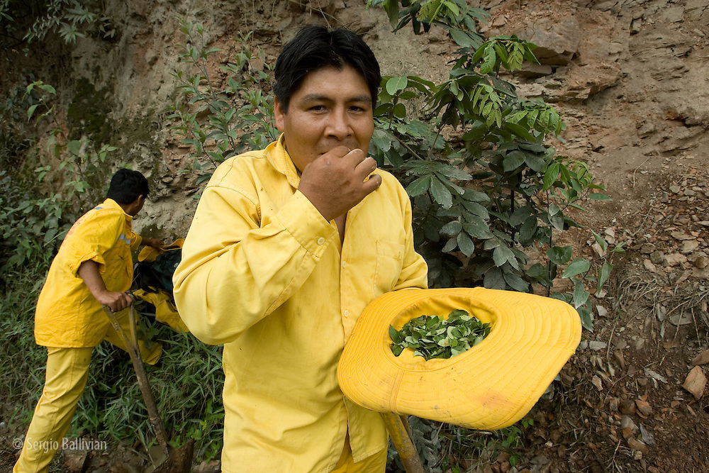 Road crew workers chew coca leaves while working in order to maintain strength and stave off hunger while performing  manual maintenance of the dirt road to  the Yungas region near Coroico east of La Paz, Bolivia