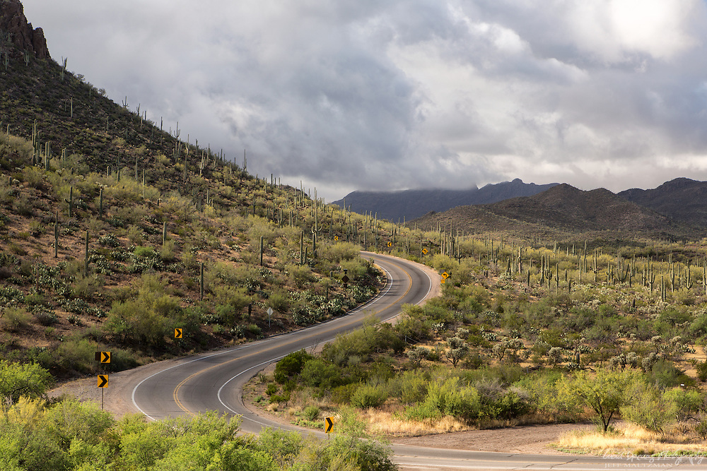 Winding road through Saguaro National Park West on a stormy summer morning.  Scenic Drives SNP/TMP.