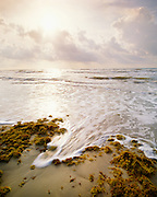 0505-1008F ~ Copyright: George H. H. Huey ~ Gulf beach, morning, with sargassum. Padre Island National Seashore, Texas.