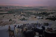 West bank; oasis in desert of Judea  jericho  Israel     ///  West bank; oasis au milieu du désert de Judée  jericho  Israel   ///     L931002a  /  R00061  /  P116512