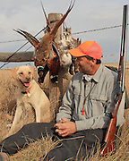 Pheasant Hunting Keith Crowley and his Yellow Lab, Rosie, pheasant hunting in North Dakota.