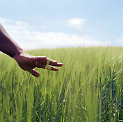 Young woman touching tall grass in field, close-up of hand