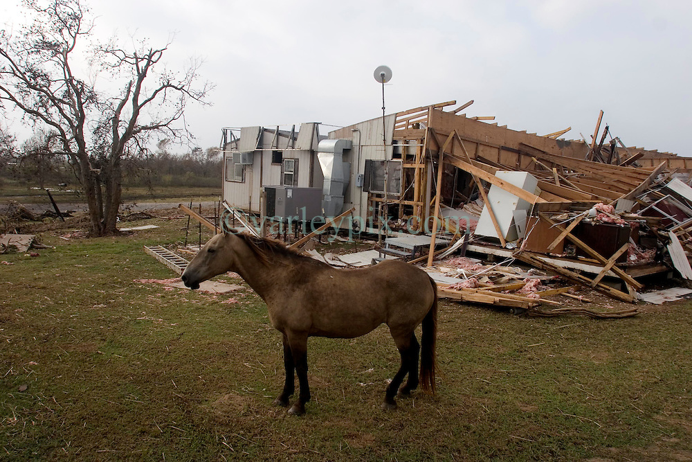 25 Sept, 2005.  Cameron, Louisiana. Hurricane Rita aftermath. <br /> A horse, cut loose ahead of the storm wanders amidst the destruction.<br /> Photo; ©Charlie Varley/varleypix.com