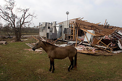 25 Sept, 2005.  Cameron, Louisiana. Hurricane Rita aftermath. <br /> A horse, cut loose ahead of the storm wanders amidst the destruction.<br /> Photo; &copy;Charlie Varley/varleypix.com