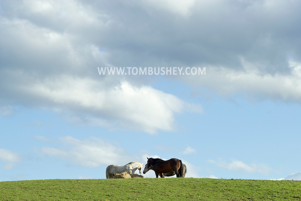 Augusta, New Jersey - Horses in a farm field on May 10, 2012.