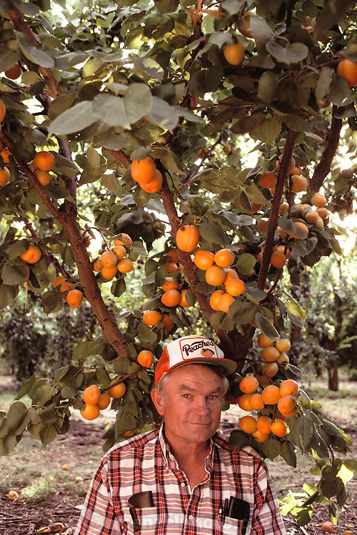 Floyd Zaiger under an aprium hybrid tree. Floyd Zaiger (Born 1926) is a biologist who is most noted for his work in fruit genetics. Zaiger Genetics, located in Modesto, California, USA, was founded in 1958. Zaiger has spent his life in pursuit of the perfect fruit, developing both cultivars of existing species and new hybrids such as the pluot and the aprium. Zaiger under an aprium (apricot & plum) tree- MODEL RELEASED. 1983.