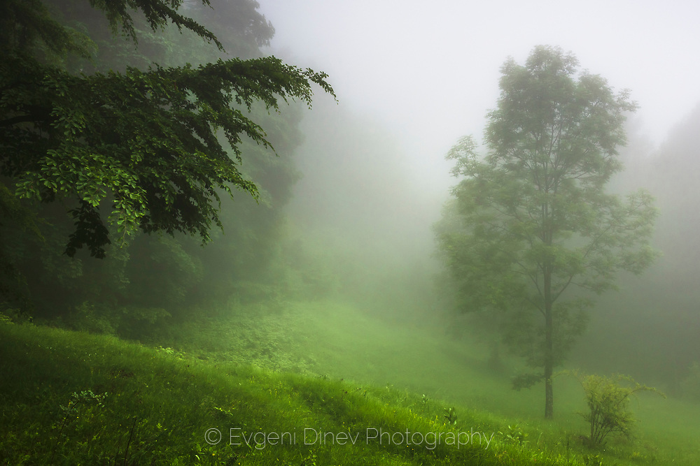 Amazing soft-green forest scene