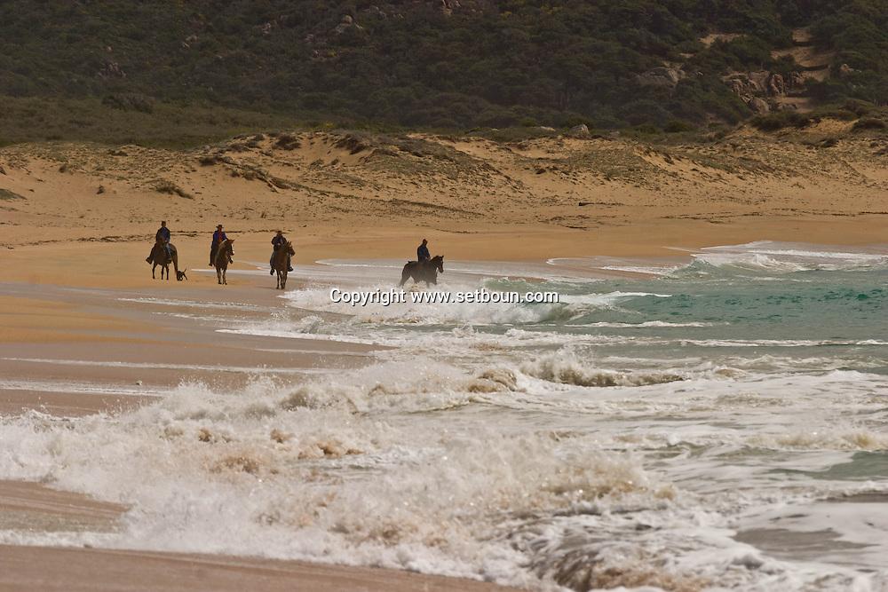 Corsica. France. Horse riding around Tradicetto beach ,  Corsica south  France /   randonnee a cheval campagne de Tradicetto,   Corse du sud  France
