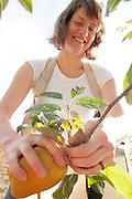 Emmalee picks apples for Wandering Aengus Cidery in Salem, Oregon.