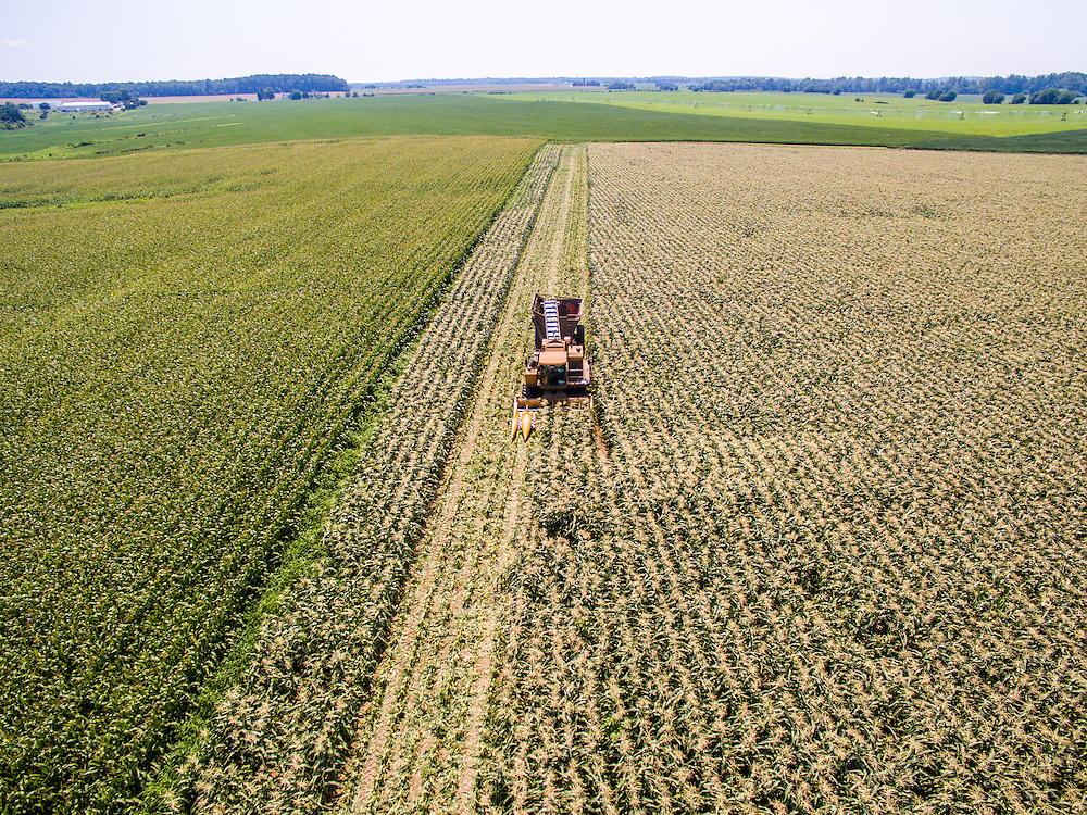 Aerial of corn being harvested at Bluestem Farm in Chestertown, MD.