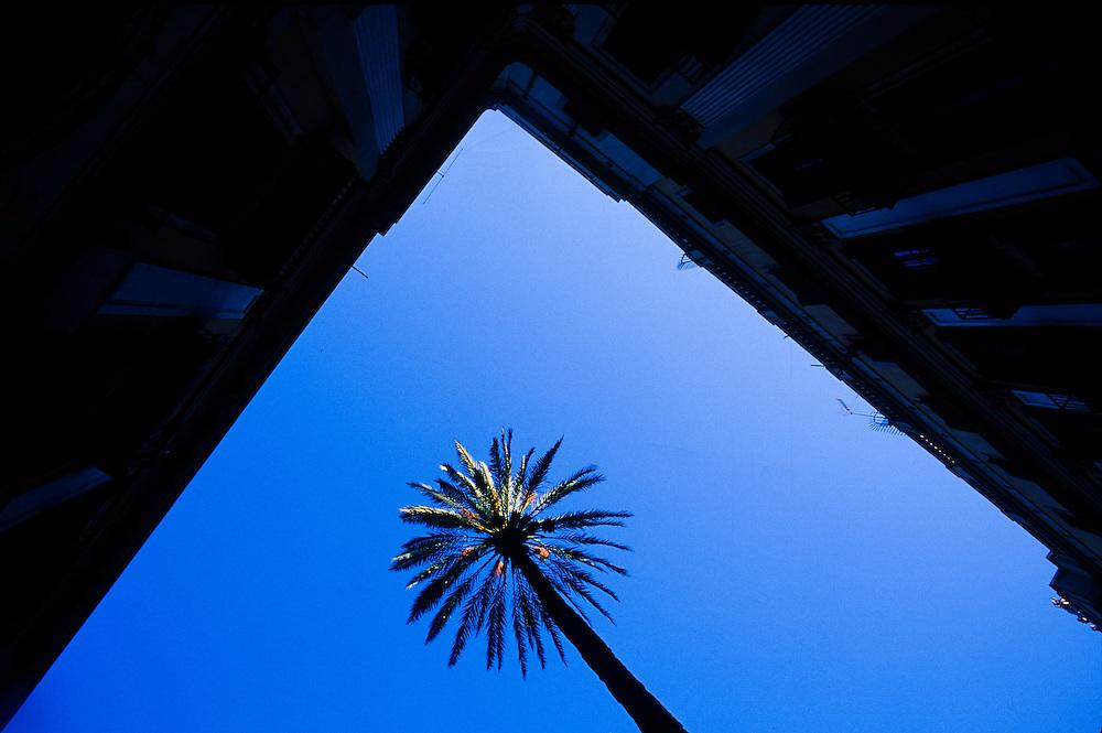Courtyard palm tree in Barcelona, Spain.
